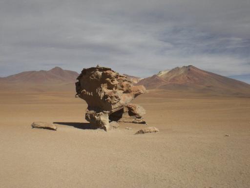 De boom van steen