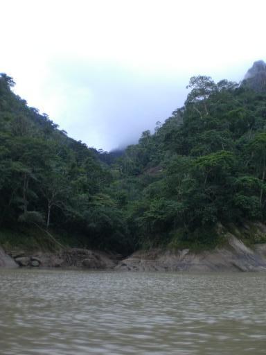 jungle (doet wel denken aan LOST, niet?)