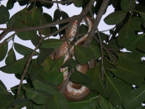 slang boven onze hoofden