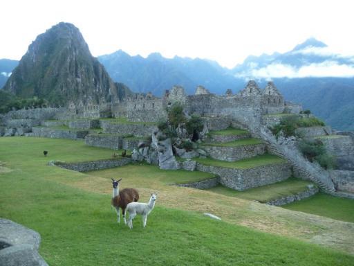 Llama's op Machu Picchu