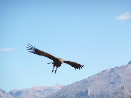 El Condor landt