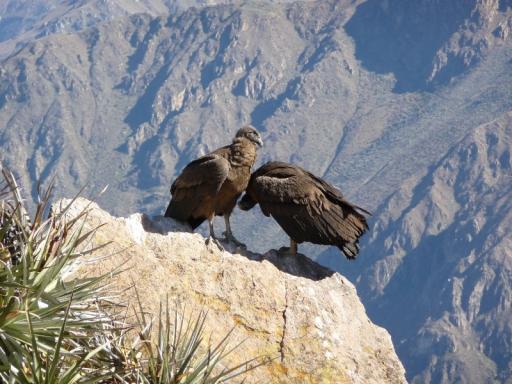 El Condor op rots