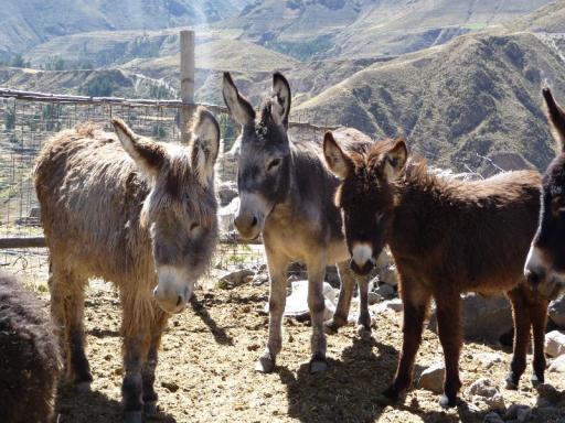 Donkeys!!