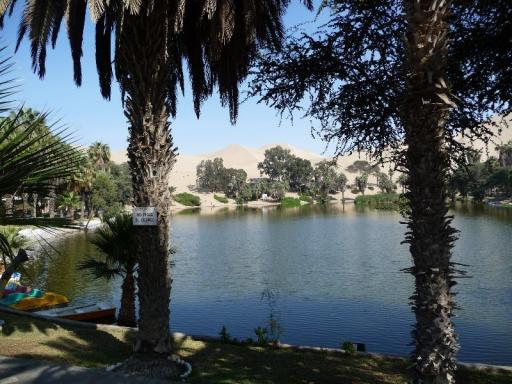 De punica oase van dichtbij