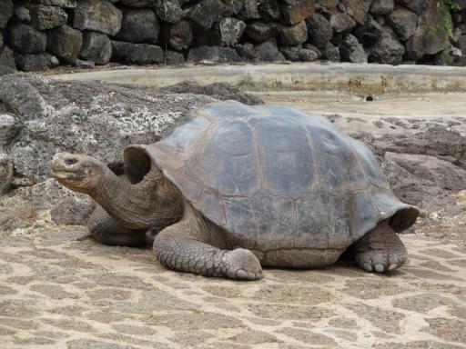 schildpad!
