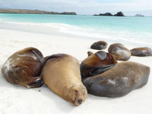zeeleeuwtjes, lekker lui