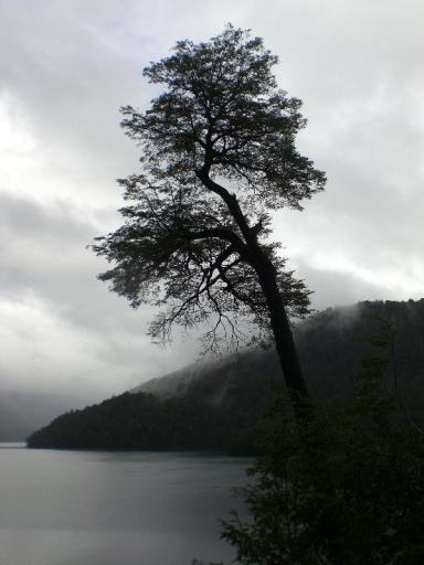 bomen zijn relaxed