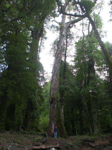 Is Majo nou zo klein? Of zijn de bomen groot?