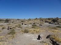 Punta Tombo 4