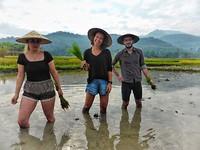 Boeren trio