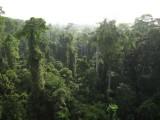 Tussen de toppen van het regenwoud
