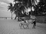 Ritje te paard op het strand?