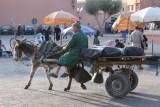 Overal zie je ezels aan het werk