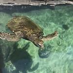 Hervey Bay Aquarium & Historic Village - 23 februari