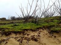 Dune de Perroquet
