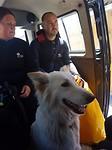Hondje mee naar de zeeleeuwen