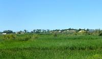 de weg loopt langs veel rijstakkers
