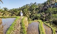 Tagalallang Rice Fields