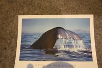 Helaas alleen een walvis op de foto