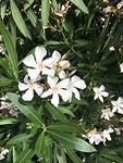 In mei staat alles in bloei