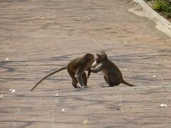Pas op voor de monkeys!