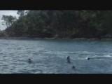 Dolfijnen in Paihia - Bay of Islands