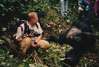 Zaire - berggorilla's, 1992