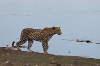 luipaard (4)
