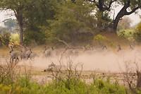 Zebra's en Roanantilopen op de vlucht