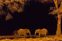 17 Olifanten in de maneschijn-1