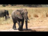 Afrika deel 2: Van Victoriafalls naar Nairobi in 2014