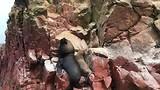 Dagje Paracas met de Ballestas Islands en ontdekkingstour van de woestijn bij Huacachina