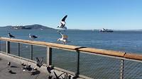 Meeuwen en Alcatraz: San Fran in een notendop