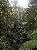 Laatste junglebos snif, zweet