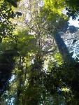 Dorrigo machtig regenwoud
