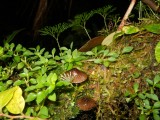 Jungle in de jungle