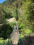 Busch walk Whanganui nat park