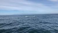 Whale watching in de Monterey Bay