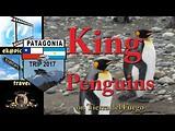 King Penguins on Tierra del Fuego
