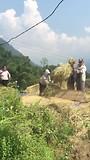 Het uitslaan van de rijst