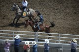 Crazy rodeo