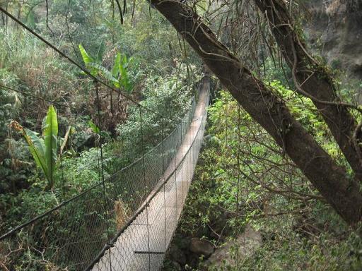 hangbrug in de jungle foto 161 vamos buenos aires