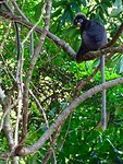 Apen op Perhentian Island