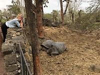 De reuze landschildpadden op galapagos