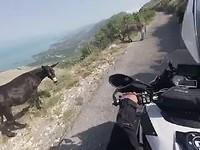 Ezels op de weg in Montenegro