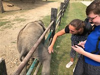 Kleine olifant aaien die jeuk had in het Elephant Breading Centre