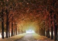 tree-lined-avenue-5309052_1920 Afbeelding van Lolame via Pixabay