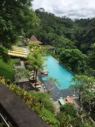 Jungle Fish pool!