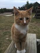 Schattige cat