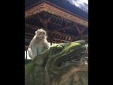 My trip to Bali 2016